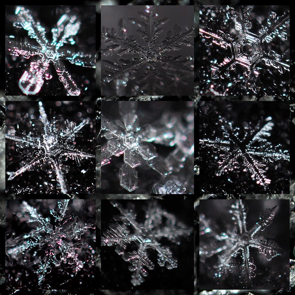 Great Scott!!!  Winter Storm Scott Snowflakes