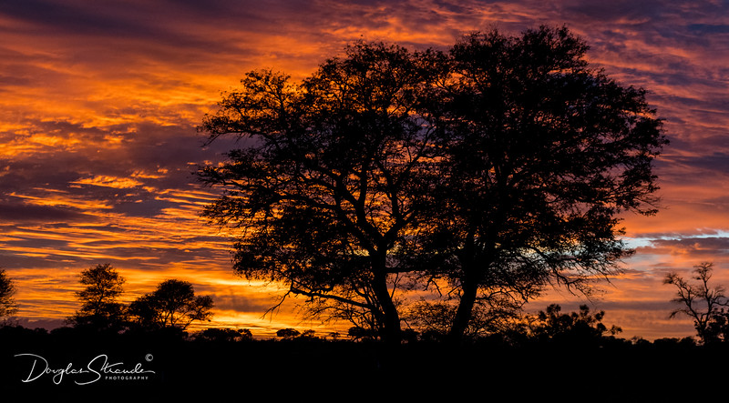 Sunrise in Kruger