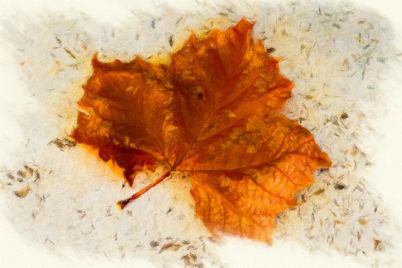 November 9 - Autumn leaf of hope.jpg