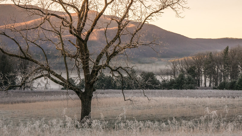 Morning in Cades Cove