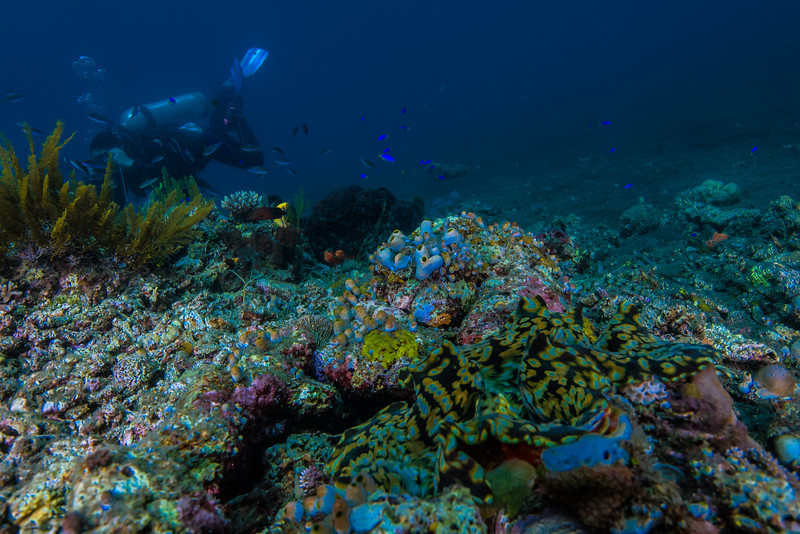 Taken at Kota Janji 1 divesite in Ternate Island, North Maluku, Indonesia during our 8D7N excursion in March 2018