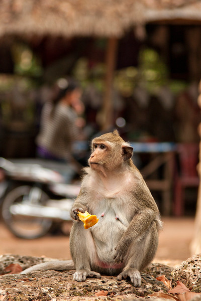 On our way back to Angkor Thom to do our final stint of exploring, we met some monkeys.