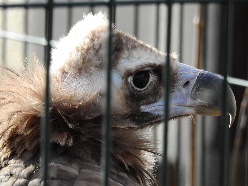 Denver Zoo 2018 (3551).JPG
