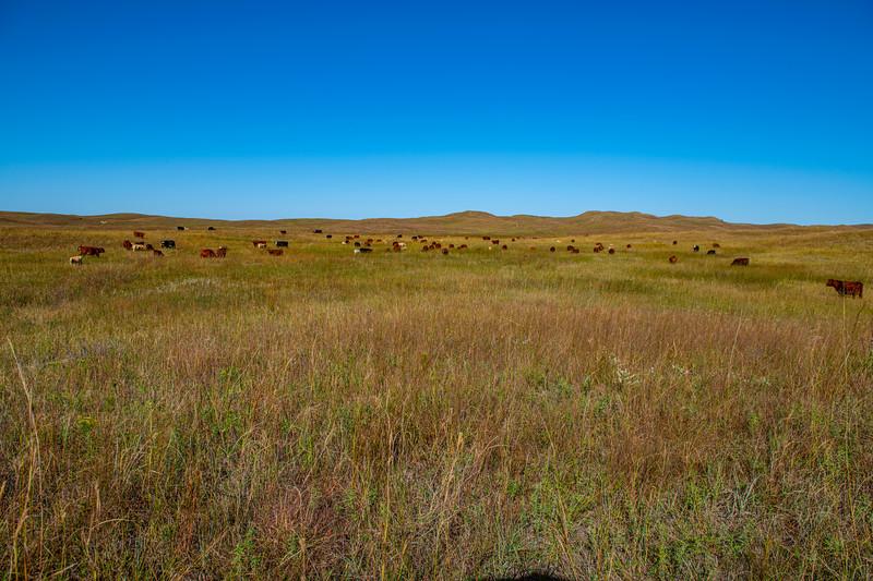 Horn Ranch-1735.jpg