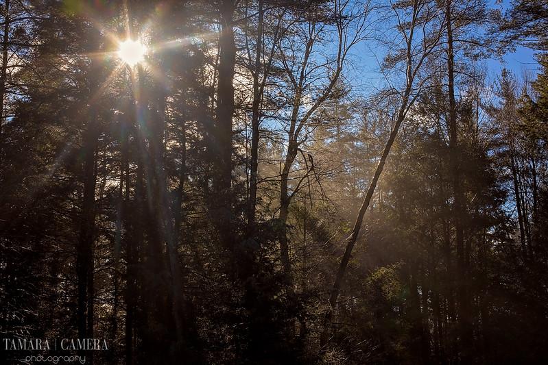 Sunshine Woods-6.jpg