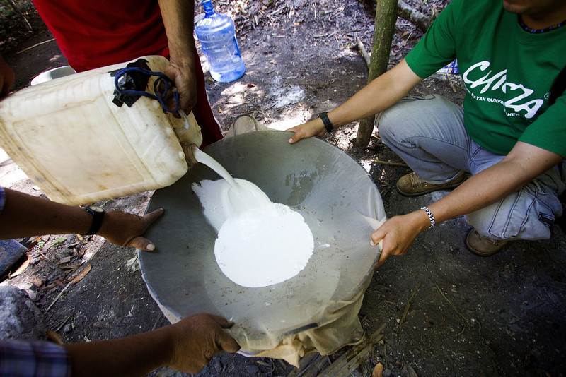 """. Men work the latex extracted from the chicozapote tree to prepare the base of gum used for organic chewing gum, in the jungle of Tres Garantias in Quintana Roo State, Mexico, on November 16, 2012. Small chewing gum producers are using old Mayan ways in the Yucatan rainforest to harvest the original \""""chicle\"""", which is making a comeback thanks to growing demand for organic gum in Europe and Asia.  Pedro PARDO/AFP/Getty Images"""