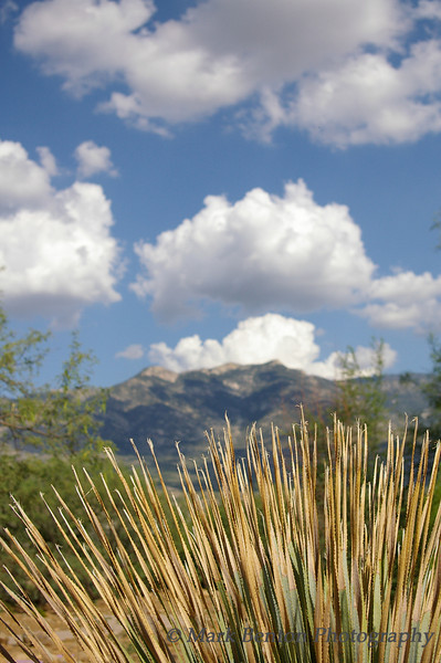 Catalina Mountain Images