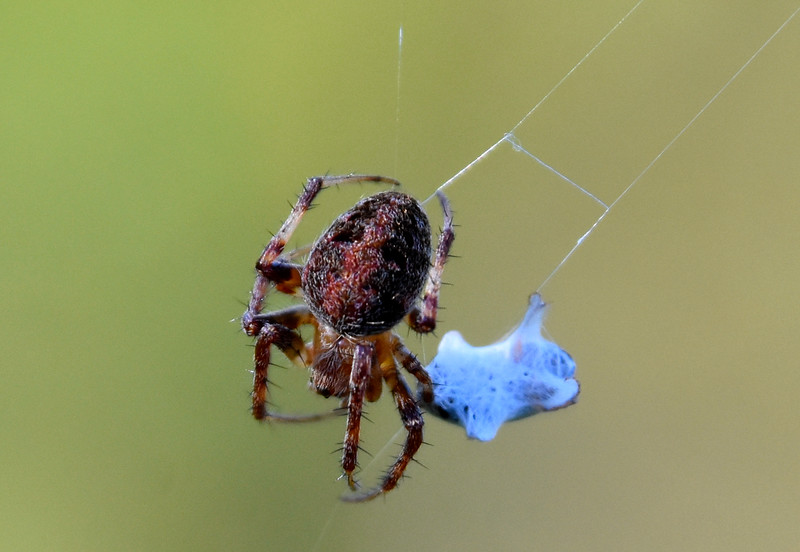 SpiderCloseup.jpg