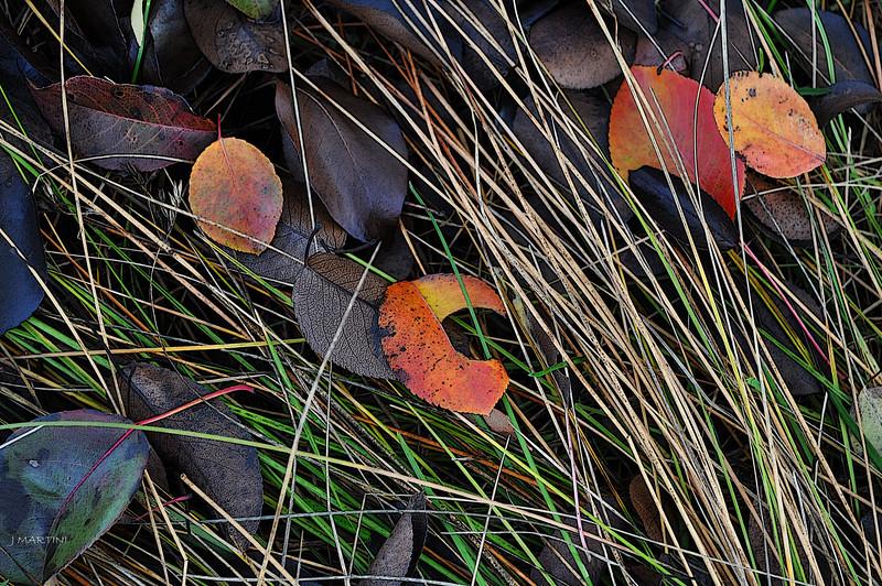 MEADOW GRASS 11-21-2014.psd