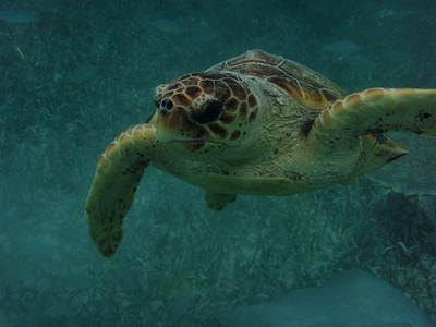 2011-12 Jeremy's Belize Photos