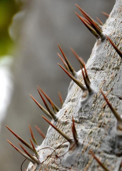 Thorns-Madagascar2.jpg