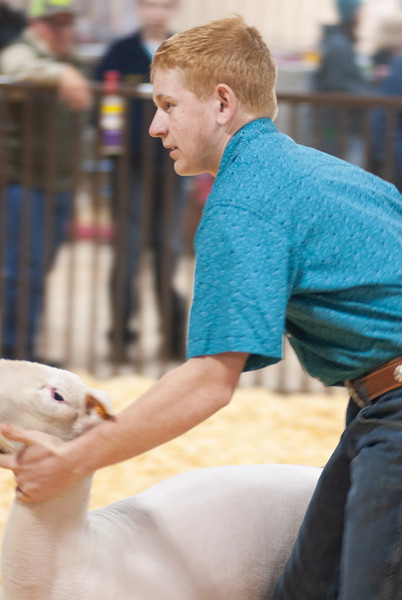 kay_county_showdown_sheep_20191207-30.jpg