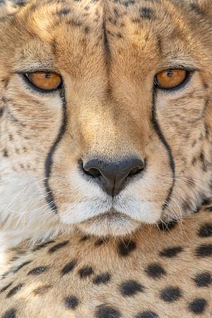 Naankuse Wildlife Sanctuary (captive)