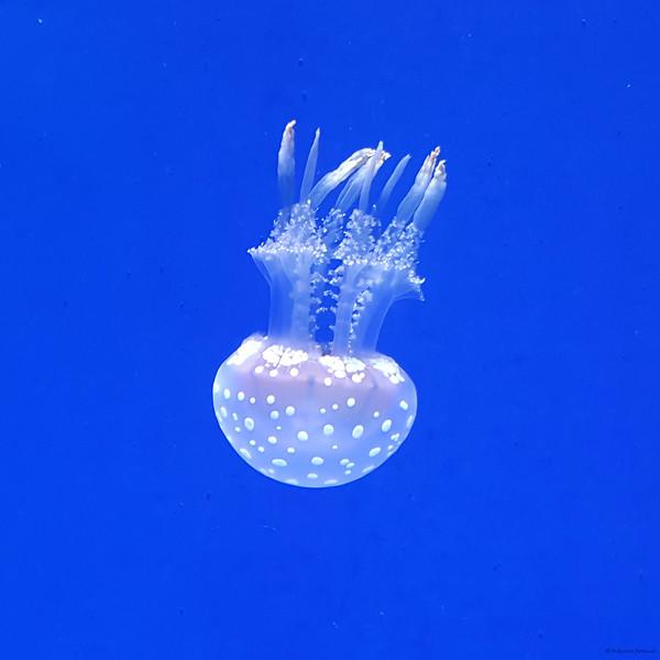 Aquatic-2.jpg