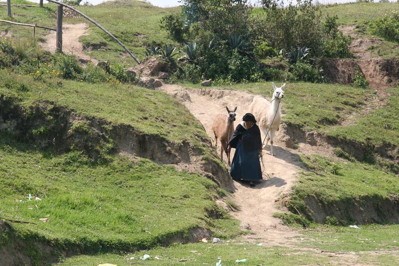 2007-02-24-0008-Galapagos with Hahns-Day 8, Otavalo-Native Ecuadorian Women-Llamas.JPG