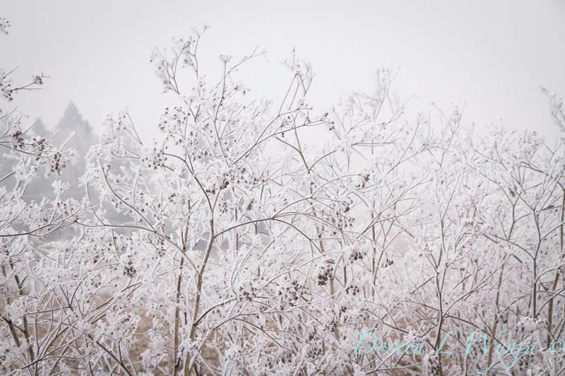 Winter frost_9333.jpg