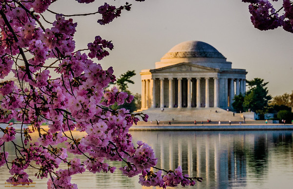 """Icons of Spring in Washington, DC"""