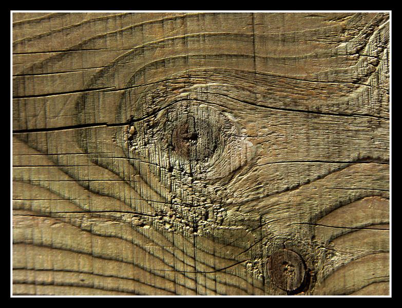 06FR15 Parco Ornitologico Tech 294.jpg