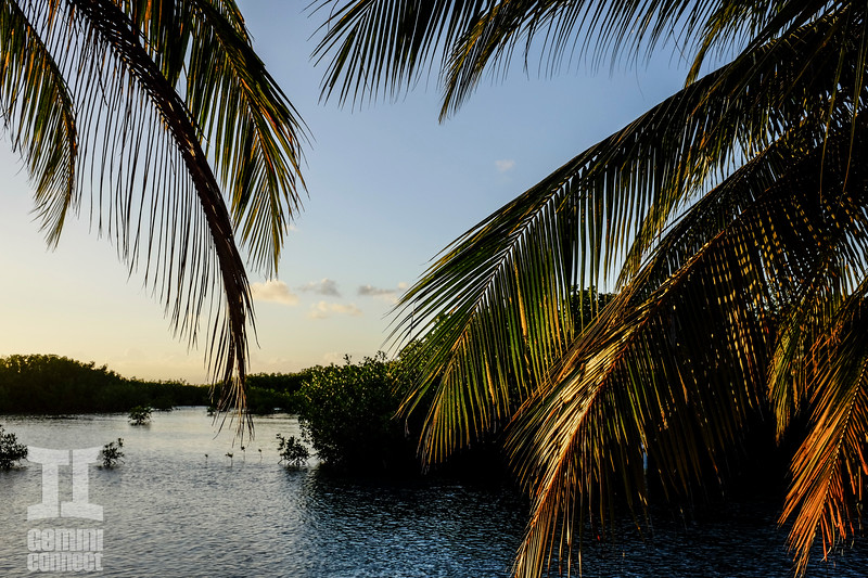 palms-placencia.jpg