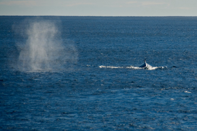 Two Humpback Whales on Surface - Exmouth, Western Australia