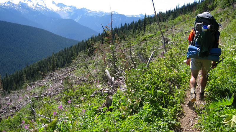 Avalanche area on Image Lake trail.