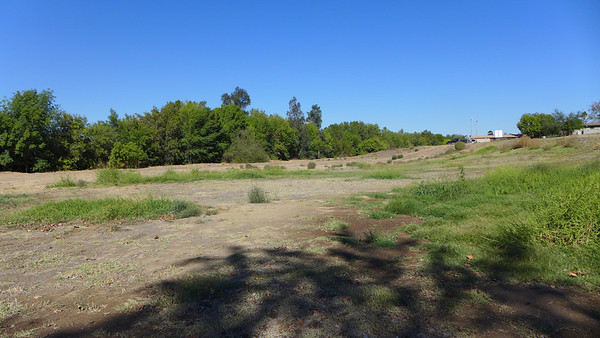 Woodley Park Cherry Orchard/Amphitheater