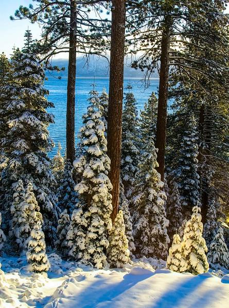 Tahoe Trees-2.jpg