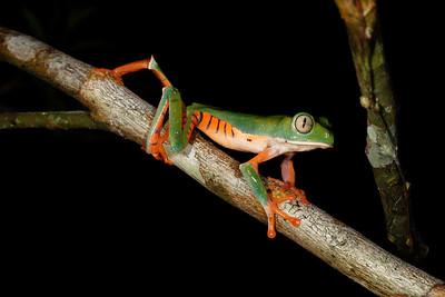 Peru Amazon 2013