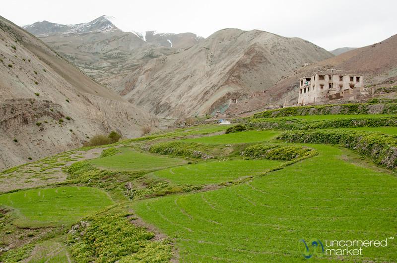 Yurutse, One House Village - Markha Valley Trek, Ladakh
