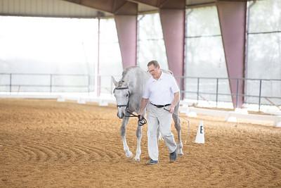 Horse 467