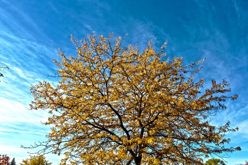 Fall_Colors_HDR11.jpg