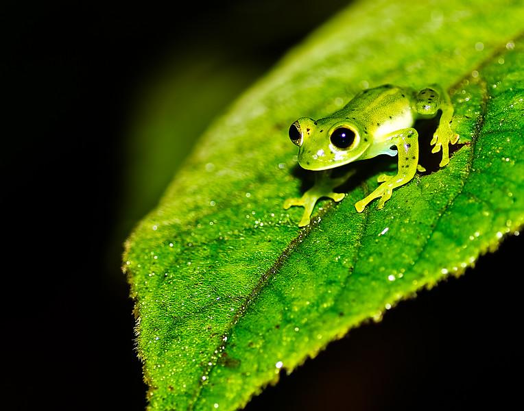 treefrog4.jpg