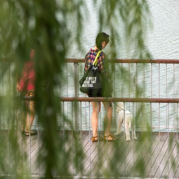 Woman with dog on footbridge, Seoul, South Korea