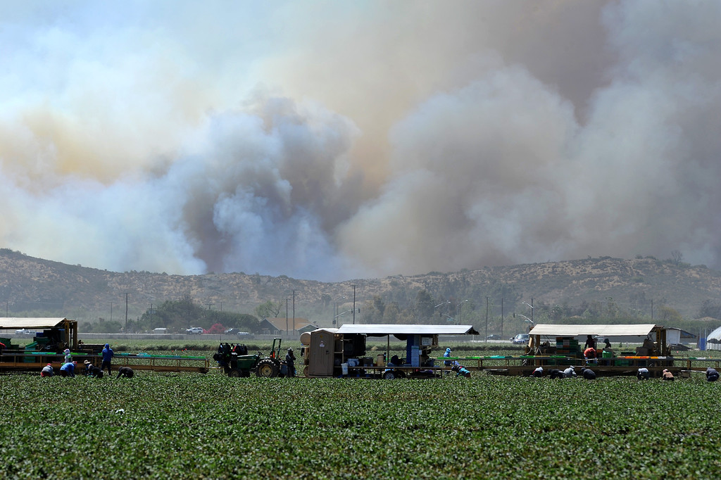 . Smoke rises from the Santa Monica Mountains as strawberry pickers work the fields in Camarillo Thursday, May 2, 2013. (Michael Owen Baker/Los Angeles Daily News)