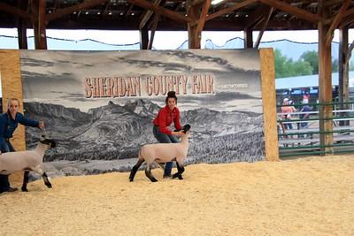 Senior Sheep Showmanship