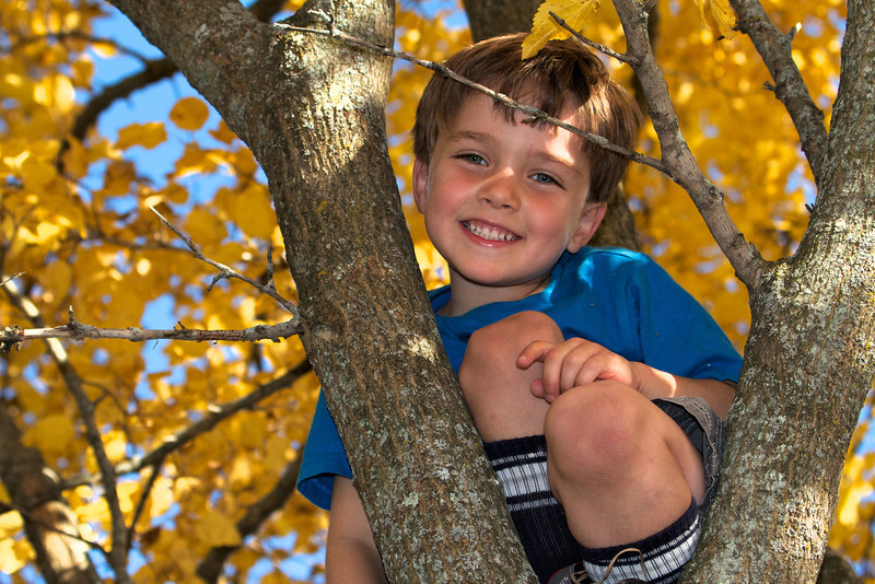 ethan in tree