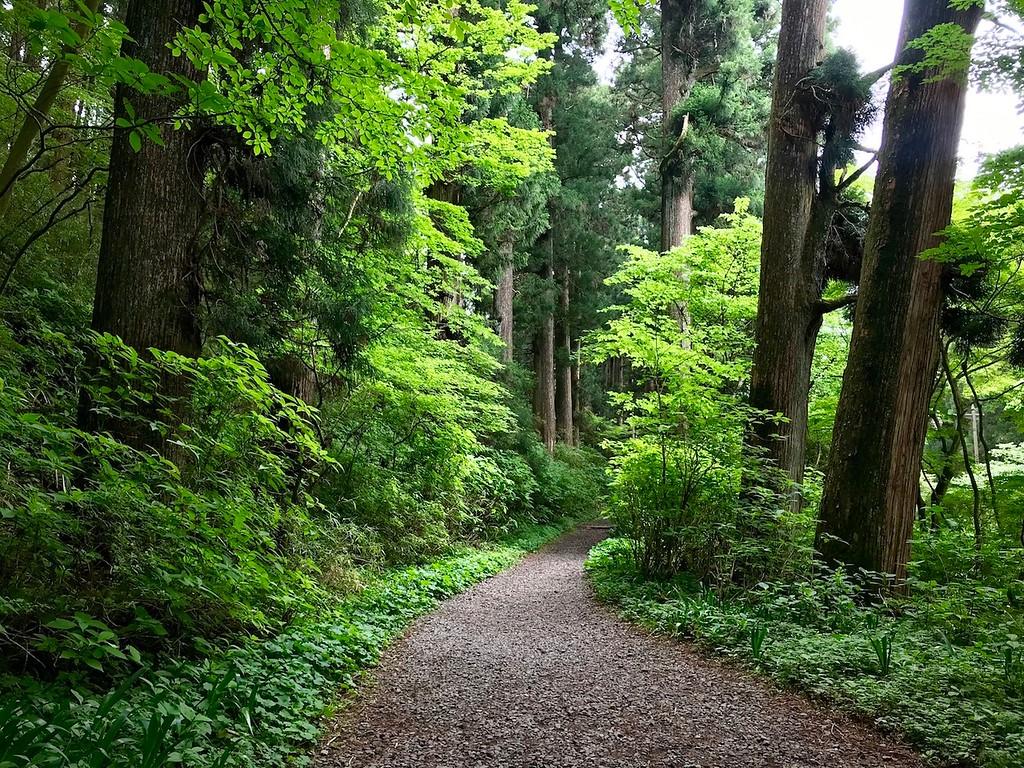 Walking along the cedar avenue.