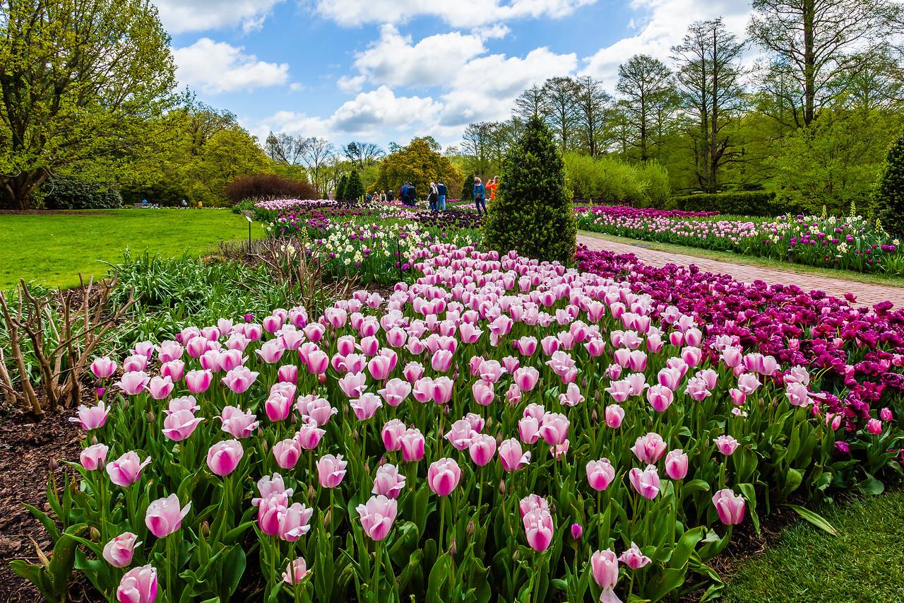 宾州长木公园,多彩的郁金香