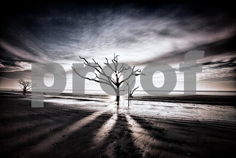 Sea Oak Tree (1 of 1).jpg