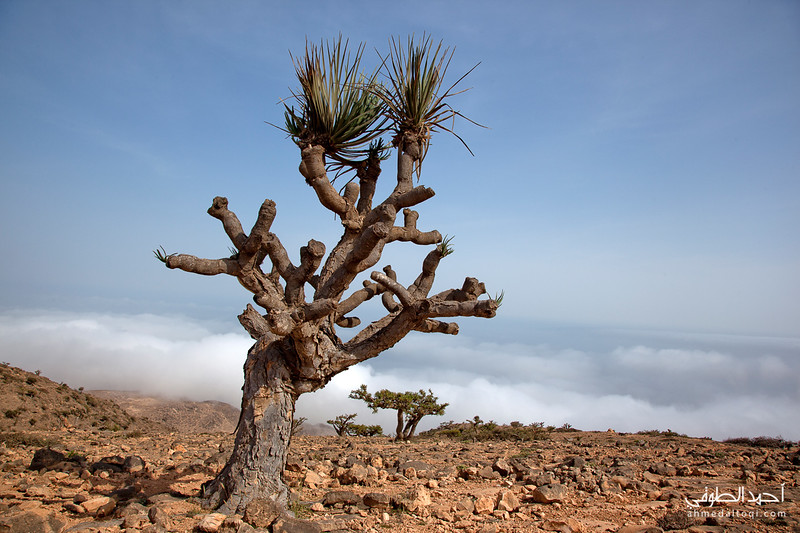 Oman (268).jpg