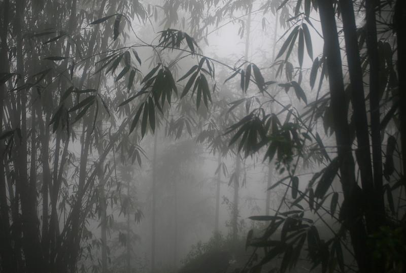 Bamboo Forest, Vietnam