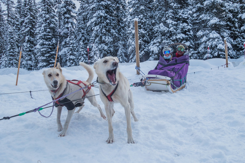 Dogsledding-banff-national-park-alberta-16.jpg