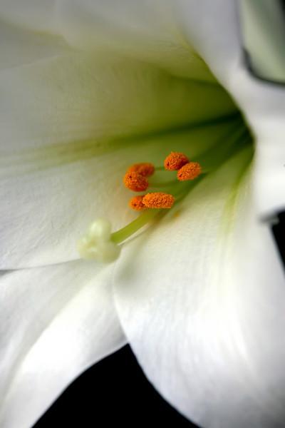 Flower - 01.JPG
