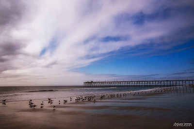 Shorebirds on Yaupon Beach - Oak Island, NC