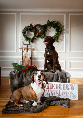 Penny + Oakley   Holiday Photos