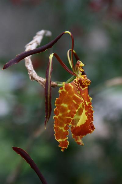 orchids 09 175.jpg