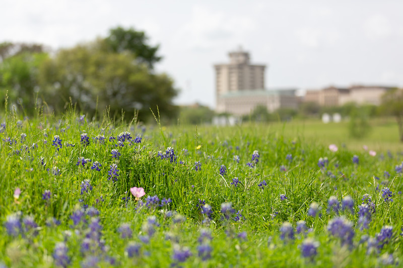 2019 Campus Bluebonnets_1647.jpg