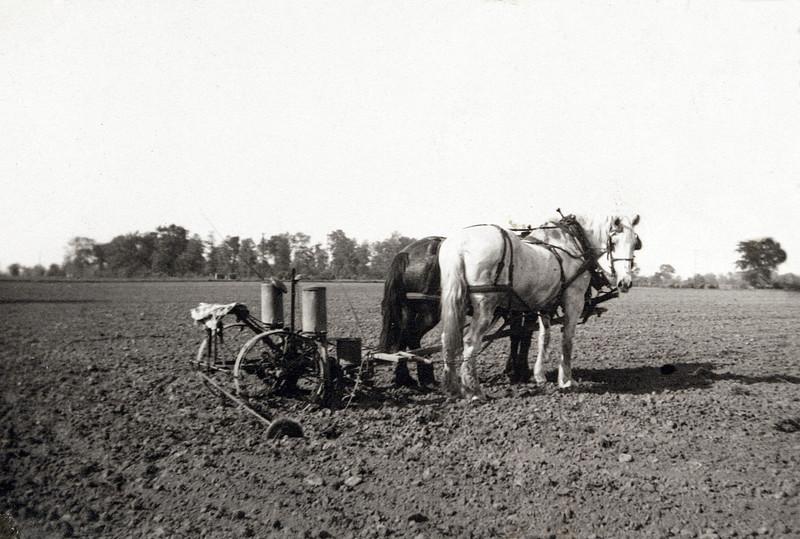 Grampa R's Horses waiting For Him.JPG