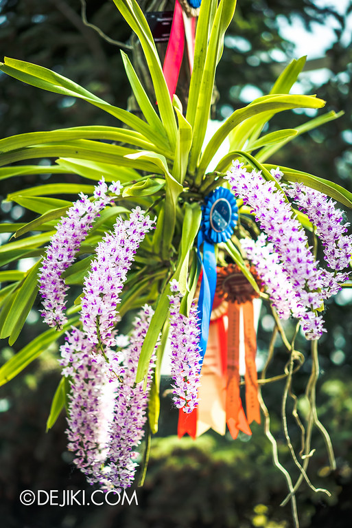 Gardens by the Bay - Orchid Extravaganza 2016 - orange dotted bokeh