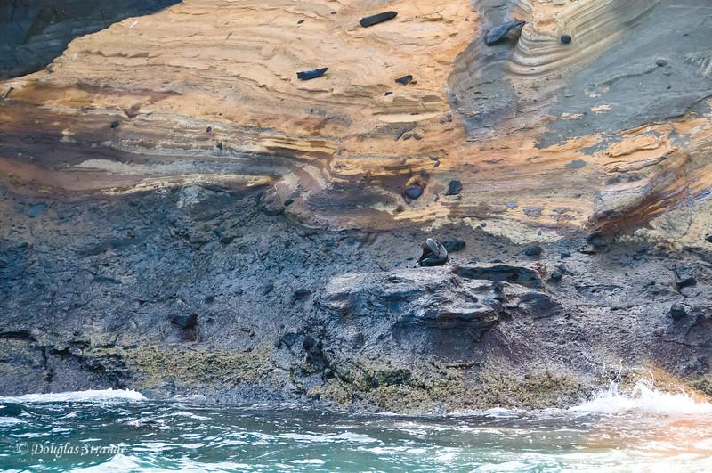 Sea Lion enjoying a little solitude at Punta Vincente Roca, Isabela Island